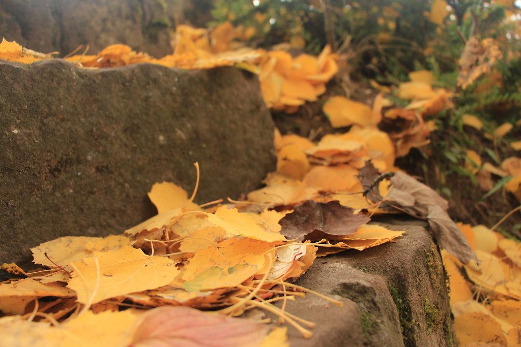 Blätter | Leaves