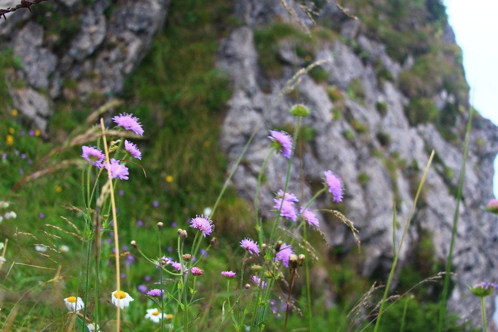 Blüten und Früchte | Blossoms and Fruit